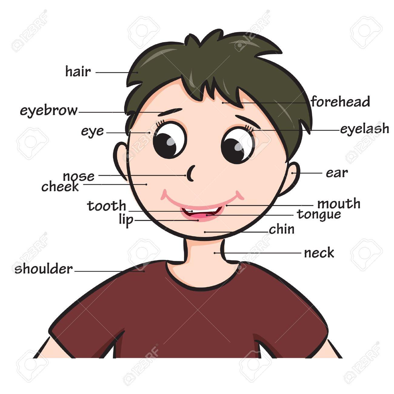 Vocabulaire Garçon De Bande Dessinée Enfant De Visage Parties Illustration pour Apprendre Les Parties Du Visage