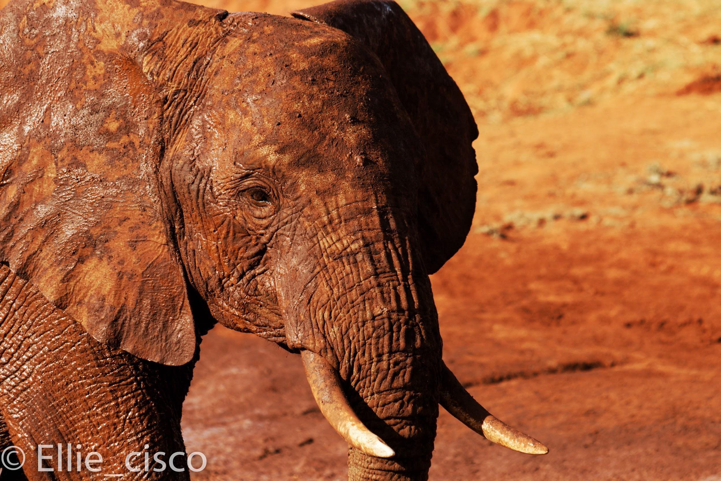 Vous Cherchez Une Destination Idyllique, Le Kenya Est Fait à Barrissement Elephant